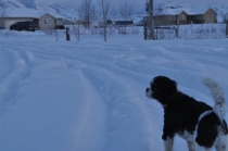 Annie leads the way, walking through tire tracks that Josh so nicely put throughout my front yard.