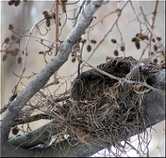 photo of empty nest in a tree