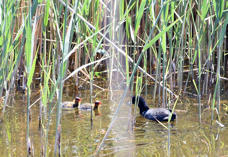 BabyCoots_blog